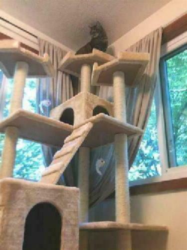 cat condo for indoor big tower multi